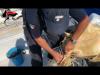 Ustica, salvata una Caretta caretta impigliata tra i rifiuti