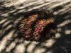 Tensioni su olio palma, a rischio export lattiero-caseari Ue