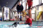 Benessere e cura degli animali, a Catania torna l'Expopet