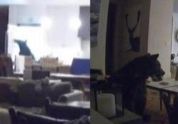 L'orso saccheggia il frigorifero mentre i ragazzi (nell'altra stanza) guardano la tv Una telecamera di sorveglianza ha catturato una curiosa scena in una casa in California - CorriereTV