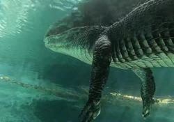 Senza paura: il subacqueo nuota sotto un grosso alligatore Jordan Wylie posa per la telecamera a pochi centimetri dal rettile nelle acque delle Everglades, in Florida - CorriereTV