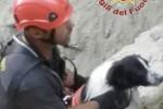 Cade in un dirupo a Vulcano, cane salvato dai vigili del fuoco
