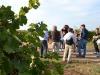 Vino: torna domenica Cantine Aperte in Puglia