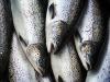 Palermo, sequestrati 126 chili di pesce non tracciato: tre ambulanti multati