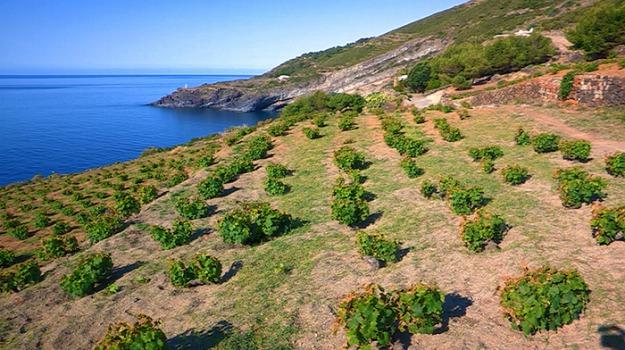 coronavirus, Pantelleria, Trapani, Economia