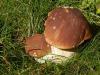 Da Palermo a Santa Caterina Villarmosa per raccogliere funghi, multati