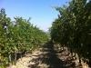 Tempo di vendemmia, i vini dei Colli Bolognesi in mostra