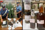 """Chef """"aromatizza"""" le conserve con la marijuana, arrestato a Pedara"""