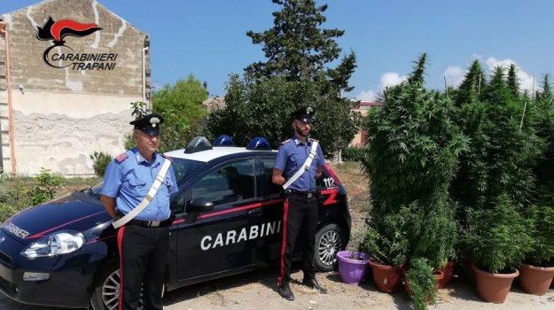 carabinieri, droga, Trapani, Cronaca
