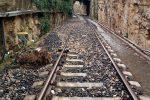 Maltempo, riaperta la linea ferroviaria Modica-Ragusa