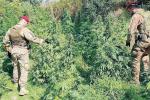Troina, nella zona di San Gregorio scoperta piantagione di marijuana