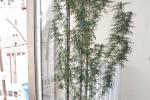 Enna, coltivava una pianta di marijuana nella camera da letto: denunciato