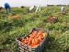 Cassibile, nuovo campo d'accoglienza per i lavoratori stagionali immigrati: pubblicato bando