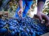 Energia da feccia vino,accordo Ca Foscari-Serena Wines 1881