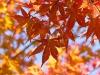 L'equinozio di autunno cade ufficialmente il 23 settembre alle 9:50, ora italiana. (fonte: Pixabay)