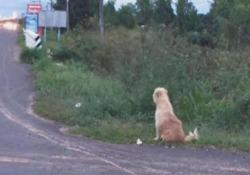 Il cane che da 4 anni aspetta la padrona sul ciglio della strada Quattro anni fa, una famiglia in Thailandia aveva perso il suo cane mentre si trovava in viaggio in auto. La storia (strappalacrime) ha però un lieto fine - CorriereTV