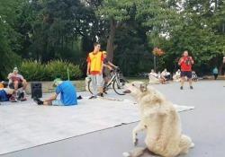 Il cane randagio che «balla» la break dance L'animale cerca di imitare le mosse dei danzatori di strada - CorriereTV