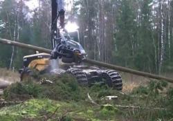 «Il macchinario più spaventoso al mondo» Nelle foreste c'è un «mostro» che taglia gli alberi in pochi secondi: la denuncia del Fondo Forestale Italiano - CorriereTV