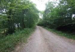 La fine dolorosa di una corsa in moto in mezzo al bosco Un ostacolo sul percorso mette fine alla corsa di questo centauro - CorriereTV