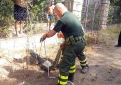 Orosei, trovato il caimano Jack: era scappato dal circo I Carabinieri indagano sulla dinamica della fuga: l'animale catturato è in buone condizioni - Ansa