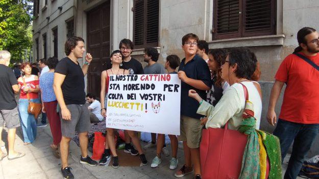potere al popolo, Palermo, Politica