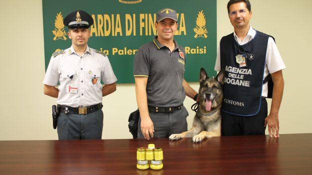Aeroporto, droga, guardia di finanza, Palermo, Cronaca