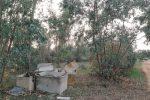Niscemi, vasche di eternit scaricate nel bosco della Sughereta
