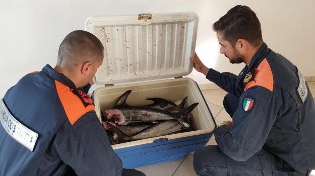pesce, salute, Messina, Cronaca