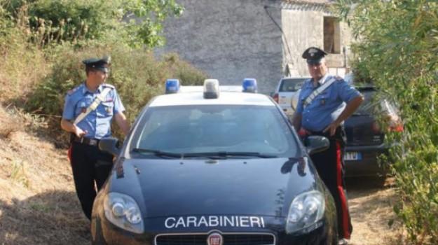 cefalù, CINGHIALI, regione siciliana, Palermo, Cronaca