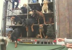 «Eating-Happiness», il trailer del film che racconta l'orrore dei cani e gatti destinati ai ristoranti   - Corriere Tv