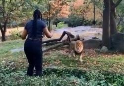 Follia a New York: donna entra nel recinto dei leoni e inizia a ballare I visitatori al City's Bronx Zoo di New York si sono trovati davanti ad una scena surreale - CorriereTV