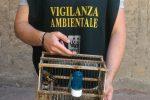 Veniva tenuto in gabbia al cimitero di San Cataldo, cardellino liberato dal WWF