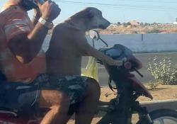 Si può portare il cane in moto? Sì, a patto che non sia così Questo motociclista meriterebbe una tirata d'orecchie - CorriereTV