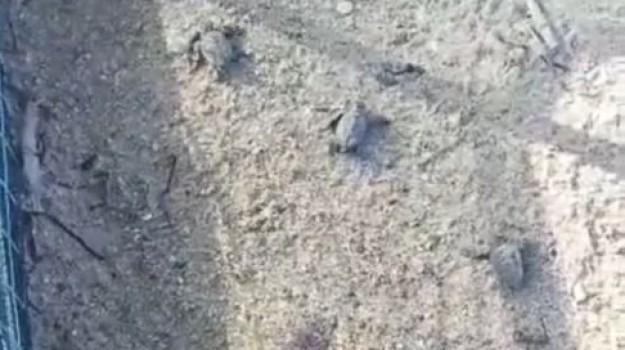 animali, Agrigento, Cronaca