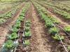 Mipaaf, 150 mln di investimenti nelle filiere dellagroalimentare