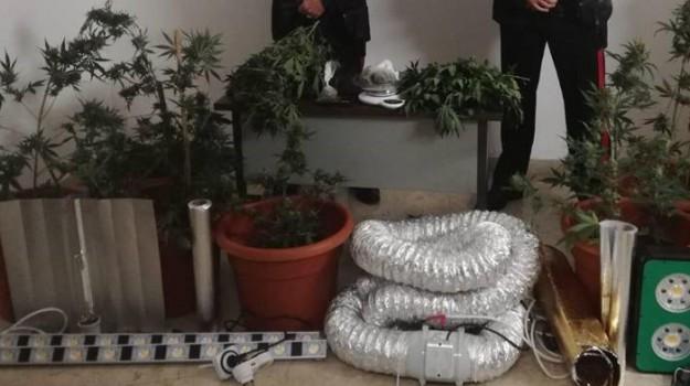 carabinieri, droga, petrosino, Trapani, Cronaca
