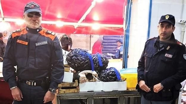 alimenti, pesce, polizia, Palermo, Cronaca