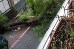 Maltempo, albero cade di fronte ad una scuola aperta a Bronte