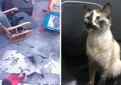 Il gatto salva il bimbo che sta per cadere dalle scale Il video del salvataggio in extremis arriva dalla Cina - CorriereTV