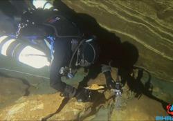 In Sardegna 50 sub volontari studiano ambiente e foca monaca Un progetto di citizen science - Corriere Tv