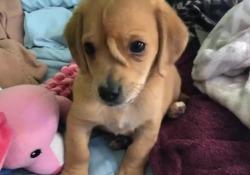 Narwhal, il video del  cane unicorno che gioca con i peluche  Il cucciolo è stato trovato da un centro di soccorso per animali per le strade di Jackson, nel Mississippi - Corriere Tv