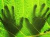 A rischio il 40% delle piante che vivono sulla terraferma (fonte: Pexels)
