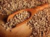 Legumi scudo anti-diabete, in particolare lenticchie