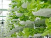 Vertical farm (fonte: Wikimedia commons/Valcenteu)
