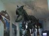 A Palermo una mostra dedicata ai dinosauri: il video