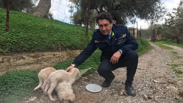 animali, Palermo, Cronaca