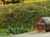 La scommessa sulla Bellussera, viticoltura da radici antiche