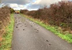 Galles: la strada coperta da centinaia di uccelli, morti contemporaneamente È mistero a Anglesey, un villaggio nel Galles - CorriereTV