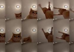 I 10 video più virali su TikTik nel 2019 C'è un gattino che danza, un orsetto gigante, una piscina che scoppia - CorriereTV