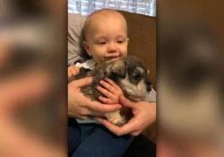 Il video più dolce della giornata: il cucciolo  fa smettere di piangere il bebè La zia mette le mette il cane in braccio e la piccola smette di piangere - CorriereTV